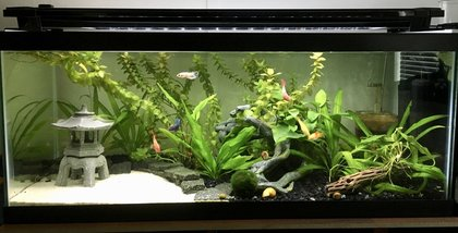 6 Months later this was how the tank looked. Its looking a little overgrown! We continued to trim the plants add root tabs and do regular water changes. & Low Tech Planted Tank azcodes.com