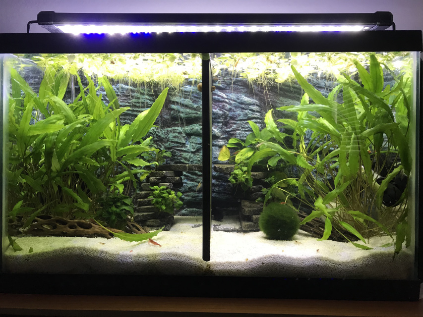10 gallon betta fish tank divider.