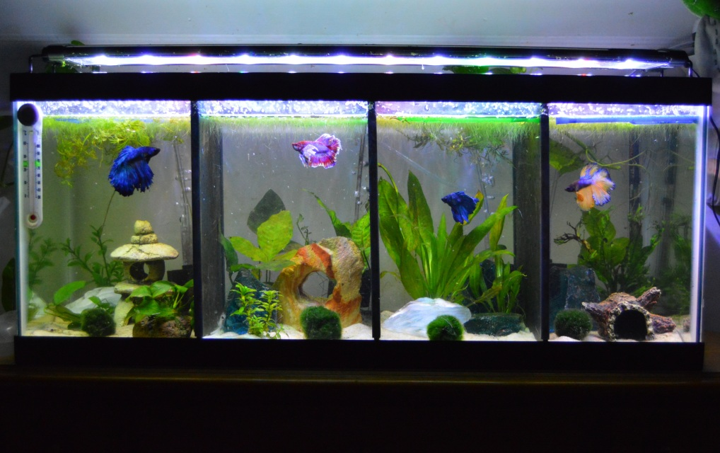 how to clear up my fish tank water